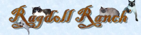 Contact Ragdoll Ranch, Ragdoll cats and kittens, adopt Ragdolls